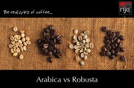 robusta coffee 4